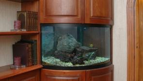 Radius Fish Tank